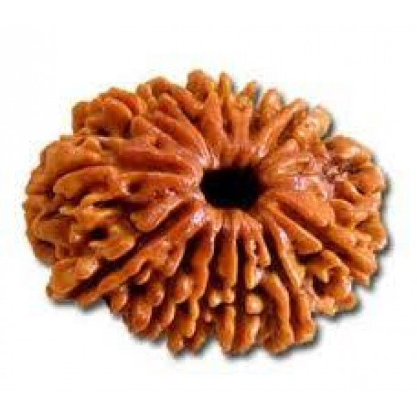 Rudraksha for Kidney cure